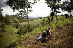 Guatemala's Green Hunger