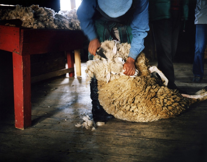 Travel_30_Sheep_Shearing_Patagonian_Estancia_Argentina.jpg