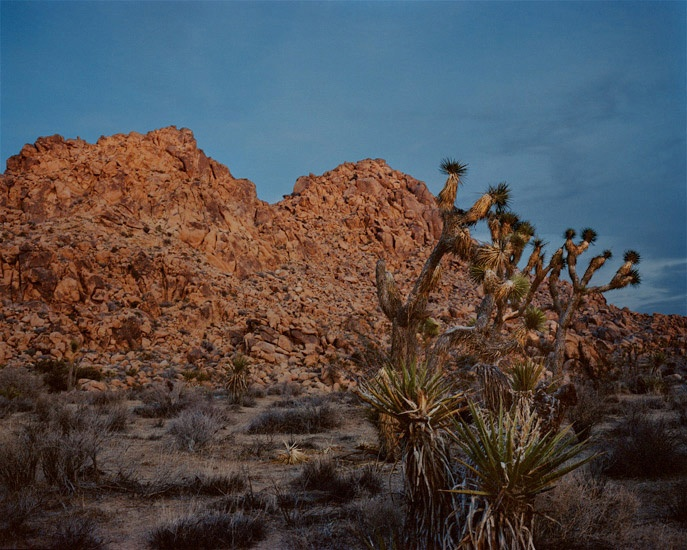 Travel_44_Joshua_tree_California.jpg