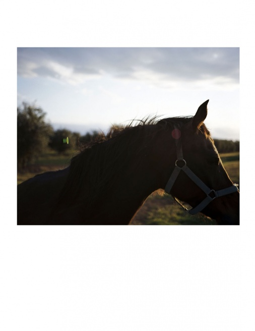 Horse in Sunset.jpg