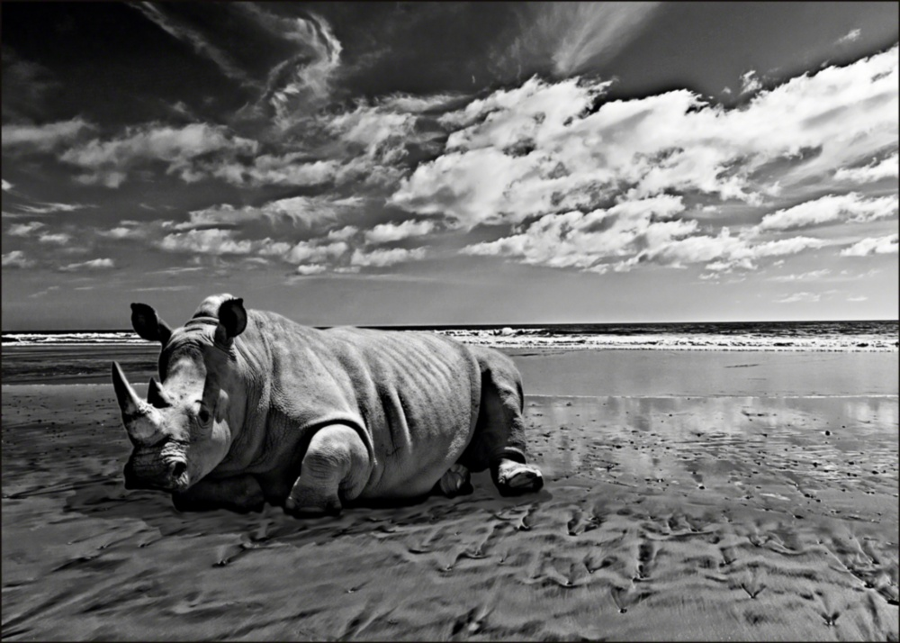50D.RHINOontheBEACH.v55fltnd_resizd.jpg